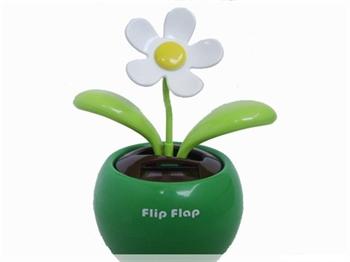 Bild von Flip Flap Grün mit weißer Blüte